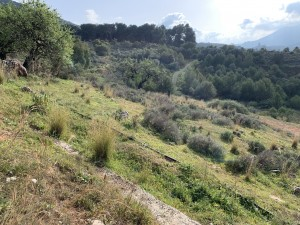 Land For Sale in Alhaurin El Grande , Málaga